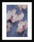 Hibiscus, apricot by Karen Armitage