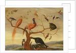 A Concert of Birds by Jan van the Elder Kessel