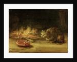 Cat by Rembrandt Harmensz. van Rijn