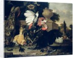 Fight between a Rooster and a Turkey, 1668 by Melchior de Hondecoeter