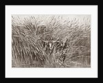 Boy leading water buffalo through tall grass in South Africa by French School