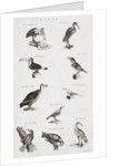 Different types of birds by Unknown artist