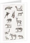 Different types of Quadrupeds by Unknown artist