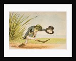 A Frog He Would A-Wooing Go by Constance Haslewood
