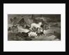 Bear Hunt by G. White
