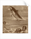 19th century illustration of a man rescuing a swimmer with a shark in the background by English School