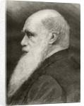 Charles Darwin by Spanish School