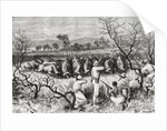 Hunting buffalo in Central Africa in the late 19th century by Spanish School