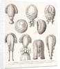 A Collection of Men's and Women's 18th Century Wigs by French School