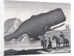 A Beached Sperm Whale by English School