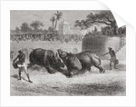 A Rhinoceros fight in Baroda, India in the 19th century. by Anonymous