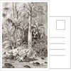Expedition of 1867 searching for a route through Nicaragua for a trans-oceanic canal, led by Englishman Captain Bedford Pim by Anonymous