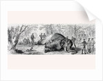 Elephant hunting in Africa in the 1860's by Anonymous