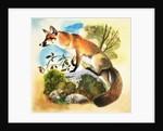 Fox, 1964 by English School