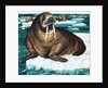 Why Laugh at the Walrus by Anonymous