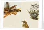Birds and Bird's Nest by English School