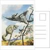 Flying Squirrels by English School