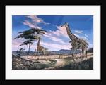 Giraffes in Africa by English School