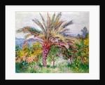Palm Tree at Bordighera, c.1884 by Claude Monet