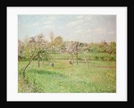Apple Trees at Gragny, Afternoon Sun, 1900 by Camille Pissarro