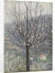Blossom, early morning by Arthur Haythorne Studd