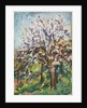 Almond Blossom on a sloping verge, c.1910 by Arthur Haythorne Studd