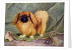 The Pekinese, Champion Chu-erh of Alderbourne by Lilian Cheviot