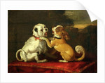 Dogs at Play by European School
