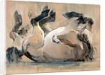 Roll, (Przewalski) by Mark Adlington