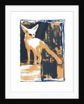 Little Desert Fox by Mark Adlington