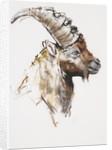 Giovanotto by Mark Adlington