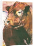 Zeus, Red Belted Galloway Bull by Mark Adlington