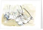 Arabian Oryx by Mark Adlington
