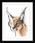 Feline (Arabian Caracal) by Mark Adlington