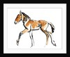 Colt (Przewalski) by Mark Adlington