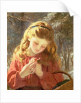 A New Friend by Sophie Anderson