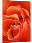 The Rose, 2003 by Myung-Bo Sim