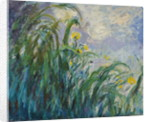 The Yellow Iris by Claude Monet