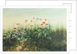Irish Wildflowers by Andrew Nicholl