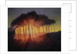 Wild Trees at Sunset, 2002 by Antonia Myatt