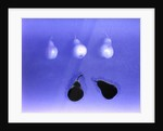Blue Pears (after Wm. Scott) 2005 by Norman Hollands