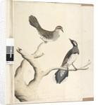 Page 4. Turdus. by Unknown artist