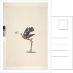 Page 24. Natural size Scarlet Robin Petroica multicolor, male, Norfolk Island, 1791-92 by Unknown artist
