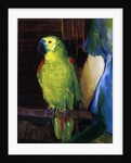 Parrot, 1915 by George Wesley Bellows