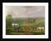 Horses at Exercise by J. Francis Sartorius