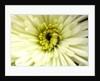 Birthday Flower by Sarah O'Toole