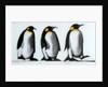 We Three Kings by Paul Powis