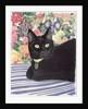 Black Cat by Anne Robinson