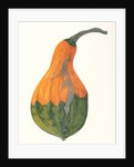 Large Gourd by Rachel Pedder-Smith