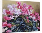 Cyclamen by Christopher Ryland
